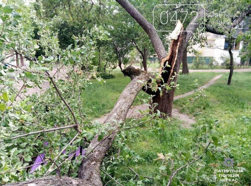 Невезуха: у Черкасах на автомобіль упало дерево (ФОТО), фото-2