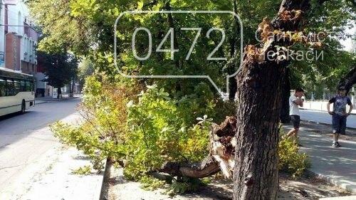 Від пориву вітру дерево впало на питний фонтанчик у Черкасах (ФОТО), фото-1