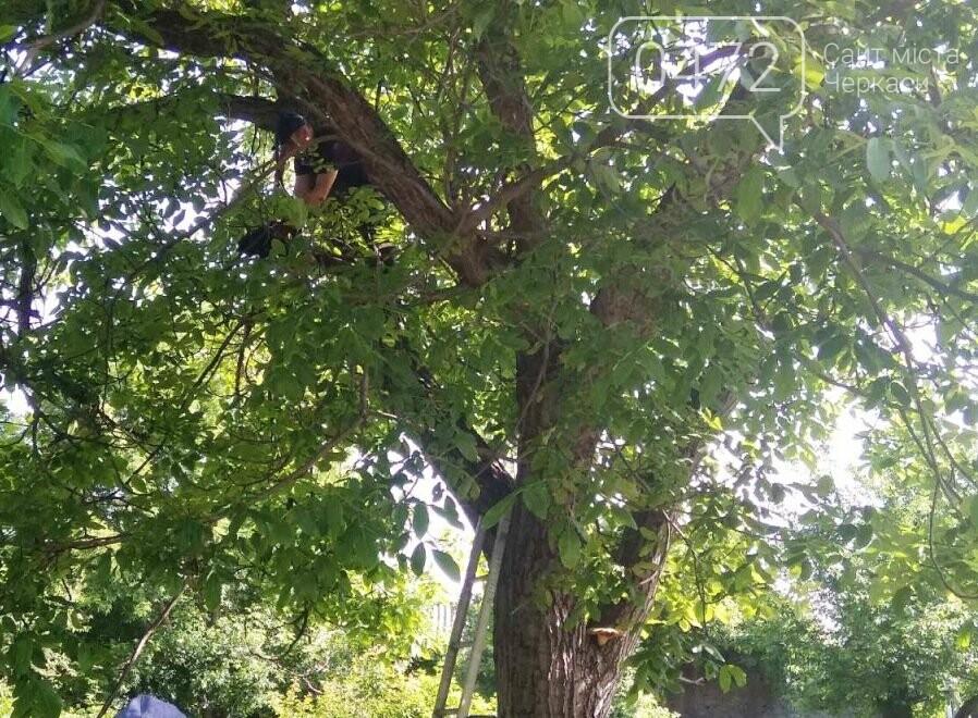 На Черкащині врятували кота: тварина дві доби просиділа на дереві, фото-1
