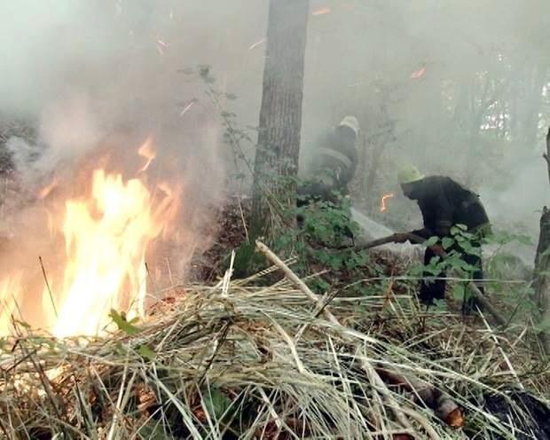 Компанія нетверезих молодиків підпалила Сосновий бір (ФОТО), фото-1