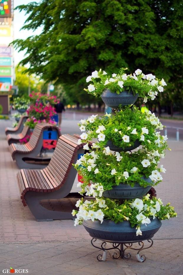 Біля черкаської мерії з'явилися квітники-піраміди (ФОТО), фото-2