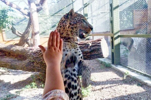 У Черкаському зоопарку тварини вітаються з відвідувачами та позують для фото (ФОТО, ВІДЕО), фото-1