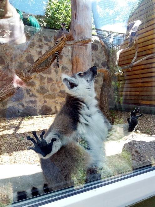 У Черкаському зоопарку тварини вітаються з відвідувачами та позують для фото (ФОТО, ВІДЕО), фото-3