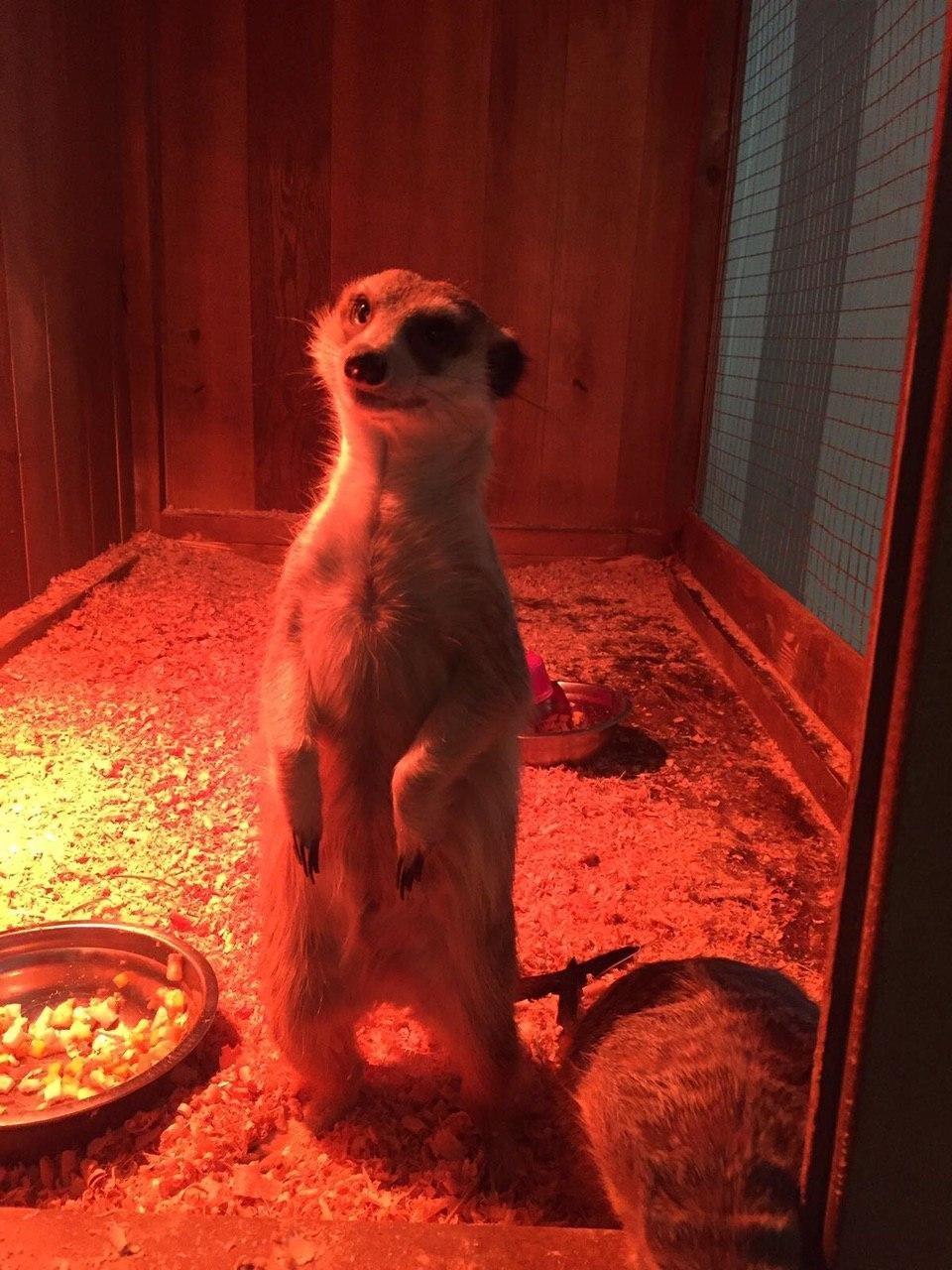 Виставка пухнастиків: зарядитесь позитивними емоціями - спілкування з тваринами, фото-4