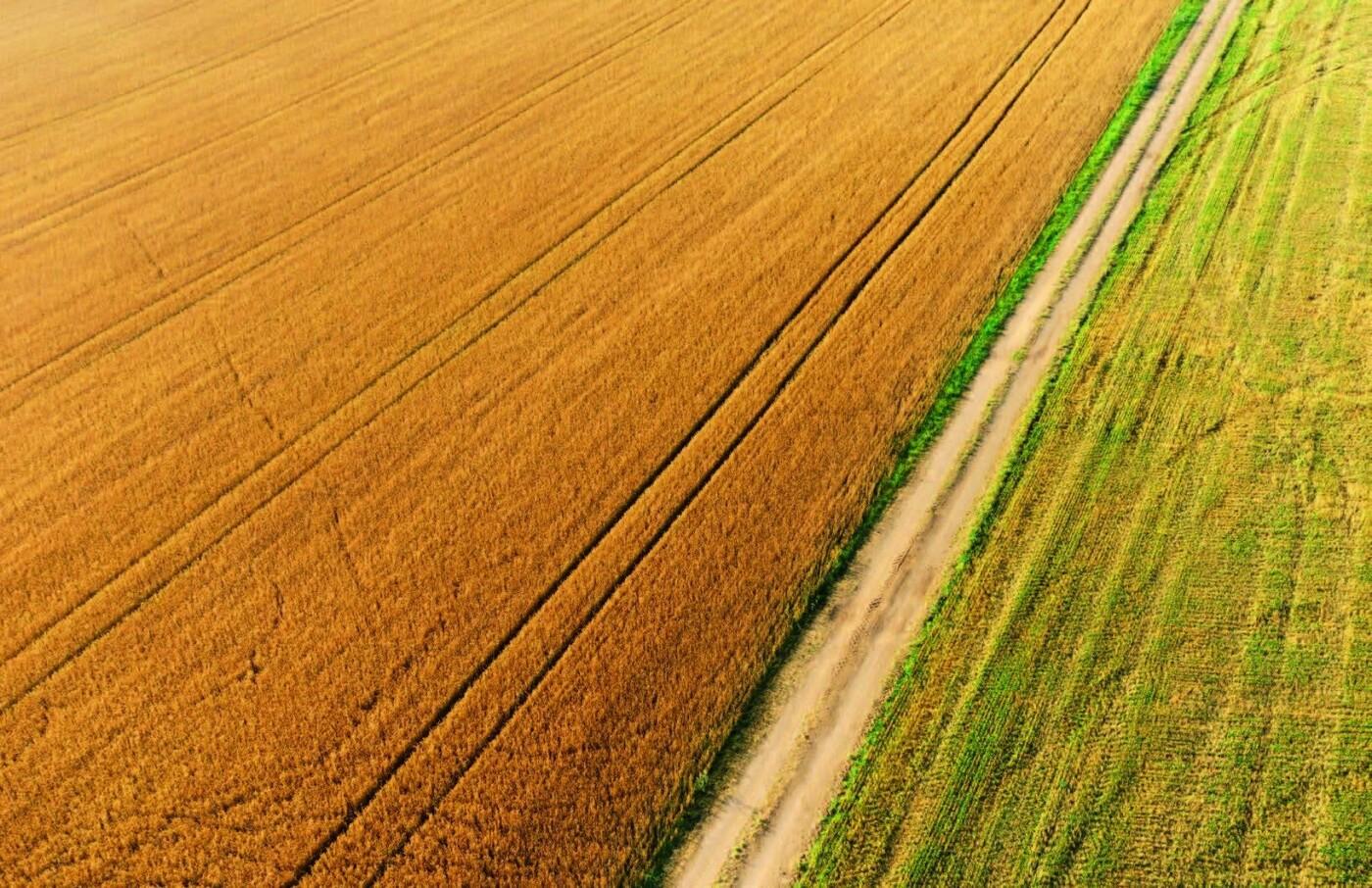 Мішки зерна замість грошей: чому мораторій на продаж землі буксує розвиток сіл Черкащини, фото-1
