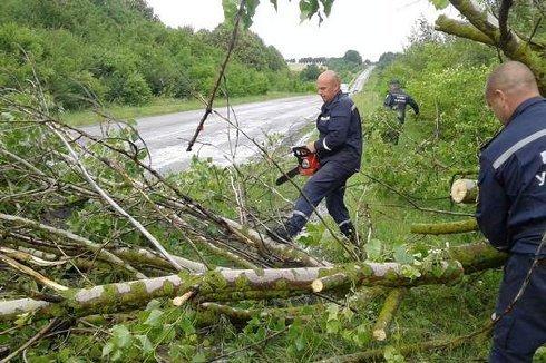 Вчорашня вітряна негода звалила 61 дерево, фото-1